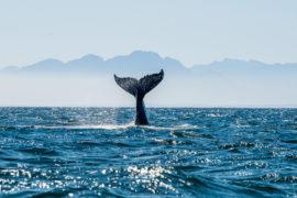 fuerteventura balene